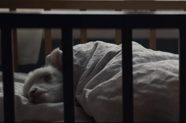 Это не ребенок: трейлер драмы «Ягненок» с Нуми Рапас в главной роли