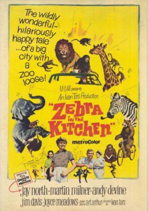 Зебра на кухне